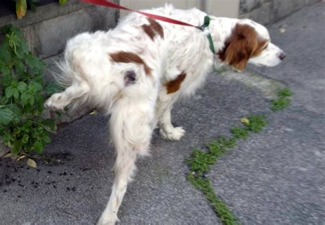 Allontanare Cani Che Fanno Cacca by Cacca Di Niente Multa Per Il Padrone Se Ha Con S 233