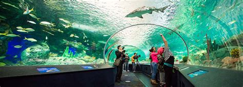 Lu Aquarium 2015 3 places to spend a rainy or cold day with in myrtle