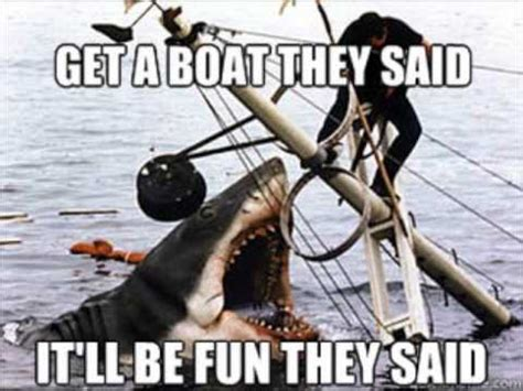 jaws cat boat the funniest jaws memes on the net great white sharks