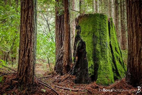 buy trail   woods moss covered tree stump photo