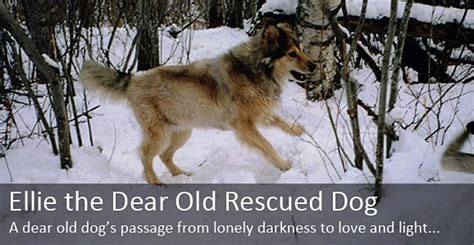 tales warming tales of rescue dogs who rescued their owners right back books animal advocates bc rescue stories dear dogs
