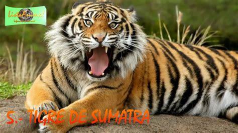 imagenes animales feroces los 7 animales m 225 s feroces del planeta youtube