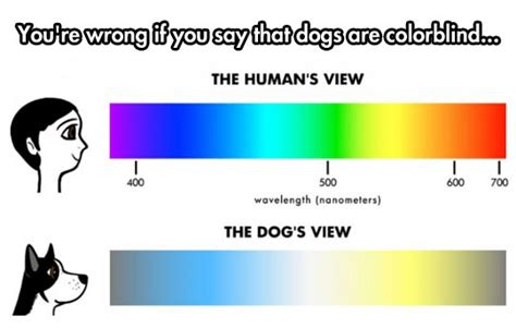 do deer see color the about a s the meta picture