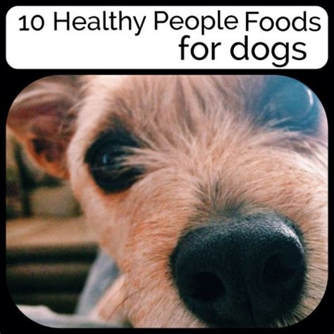 healthy food for dogs 10 healthy food for dogs my honeys place