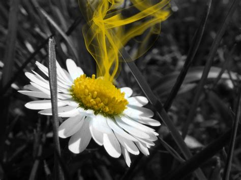 color photograph selective colour photography photography