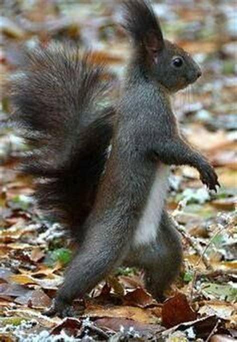 squirrel memes images squirrel memes squirrel