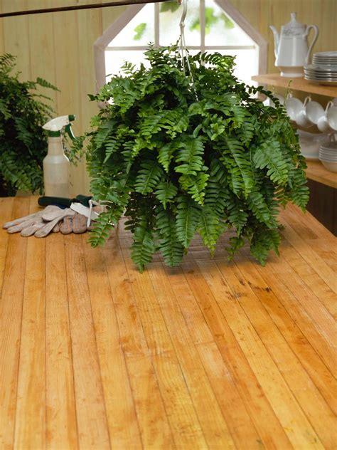 repot houseplants hgtv