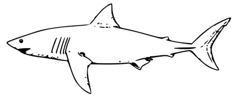 sea animals kids coloring pictures beach animals coloring