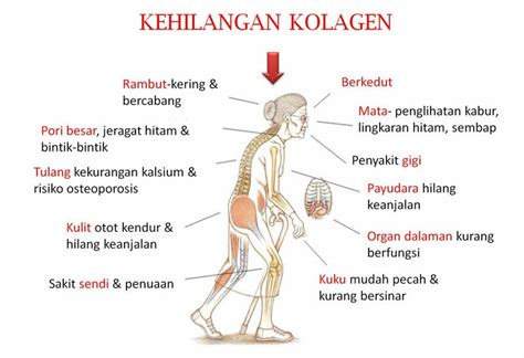 Collagen Di Pasaran kenapa collagen powder shaklee vitamin sihat