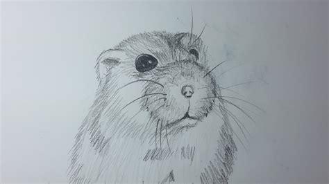 dibujos realistas y faciles como dibujar un hamster paso a paso el dibujante youtube