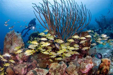 dive packages scuba diving in bonaire resorts packages caradonna