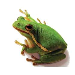 Play Dog Beds Green Tree Frog Petco