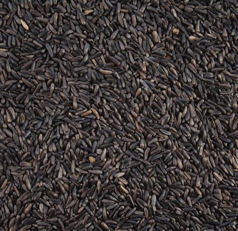 niger seed gallery