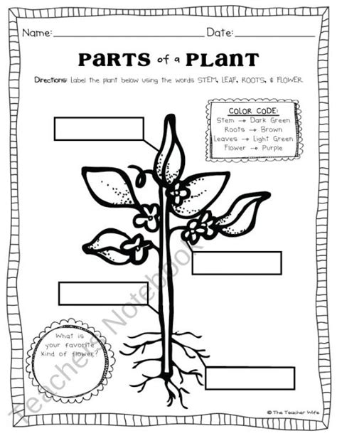 Plant Parts Worksheet by Imgs For Gt Parts Of A Plant Worksheet