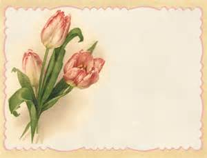 Lilac amp lavender pink tulips spring is here