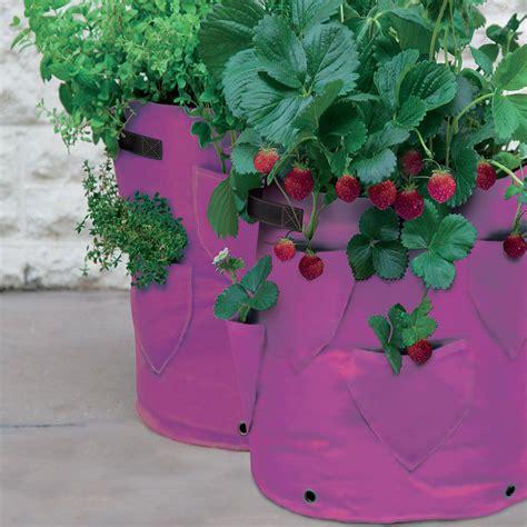 Strawberry And Herb Patio Planter Haxnicks Strawberry Planter