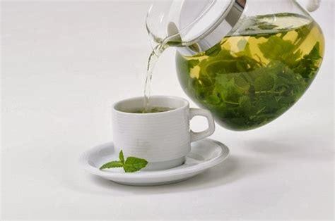 Teh Hijau Jumbo 5 manfaat teh hijau bze info
