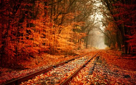 in fall railroad through the fall woods