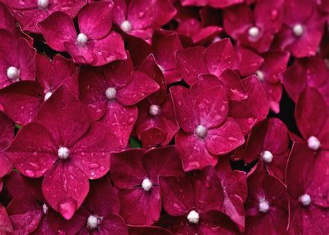 imagenes para celular flores fondos de pantalla para celular hd fondos de pantalla