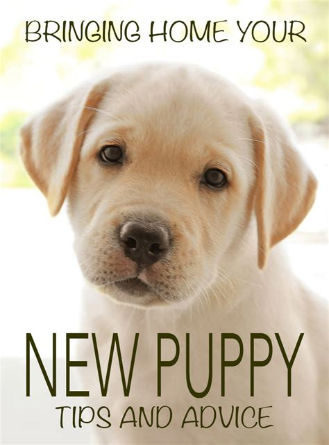 bringing home a new puppy survival tips included