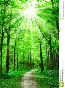 nature path in forest with stock photo image