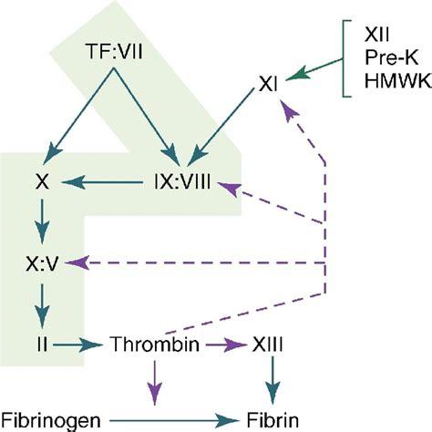 protein z dependent protease inhibitor normal hemostasis and coagulation rodak s hematology
