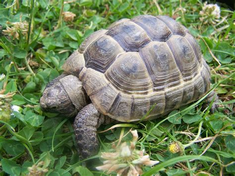 tortoise pet care pets world