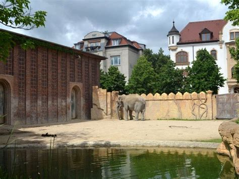 asia garten leipzig photo 95 elephant exhibit copyright 169 06 2012 by thilo