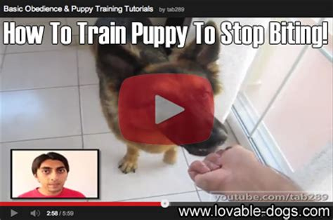how to a to stop biting lovable dogs tutorial how to puppy to stop biting lovable dogs