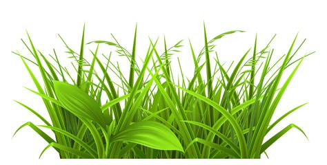 green grass clipart green grass clipart cliparts co