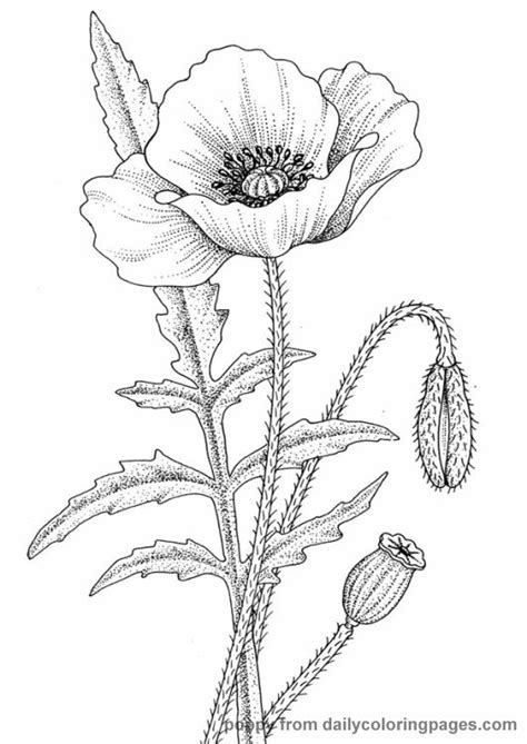 coloring pages of real flowers http dailycoloringpages images realistic flower