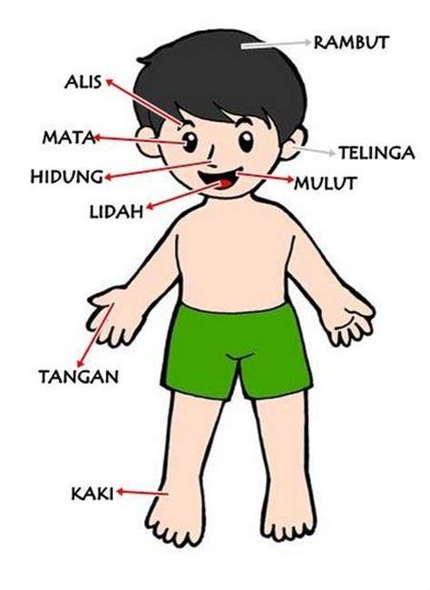 gambar anggota tubuh daunbuah