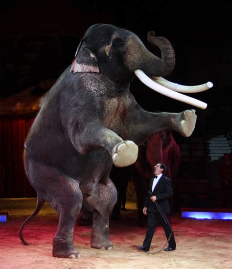 the elephant for catalan