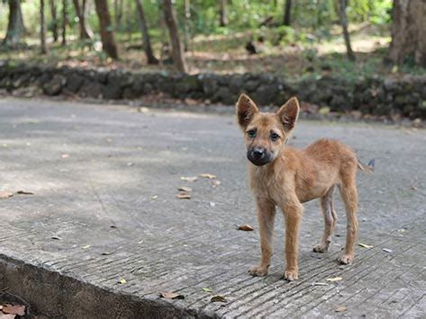 how to a stray how to help stray and lost pets petmd