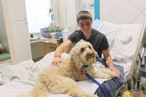 for dogs to be a therapy therapy dogs bring to patients