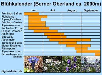 welche blumen blühen im september alpenblumen