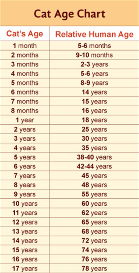 cat age chart cat age chart jpg cats pinterest 5 years 7 months and charts