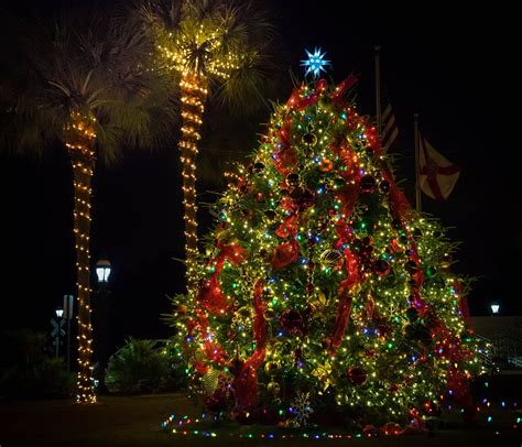 flordia xmas trees how to celebrate in florida