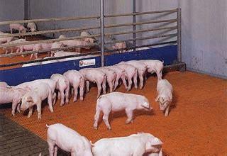 alimentazione maiali impianti alimentazione a liquido attrezzature suini