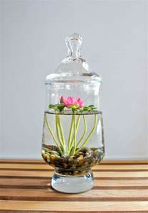 15 diy indoor water garden tips decorazilla design
