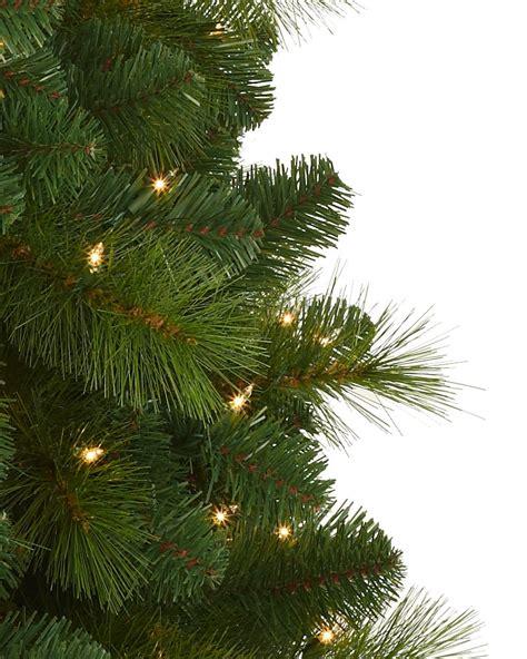 foxtail christmas pine tree treetopia