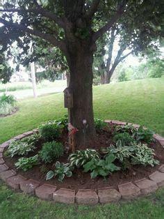 hostas around trees and hostas around my 2 backyard