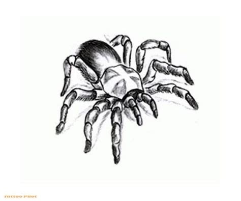 spider tribal tattoos finder ideas lettering gallery spider