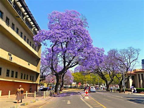 Ordinary South Church Street Apartments #2: Pretoria--1273769-37.jpg