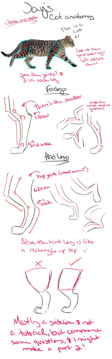 cat tutorial cat anatomy tutorial guidelines and tips legs by