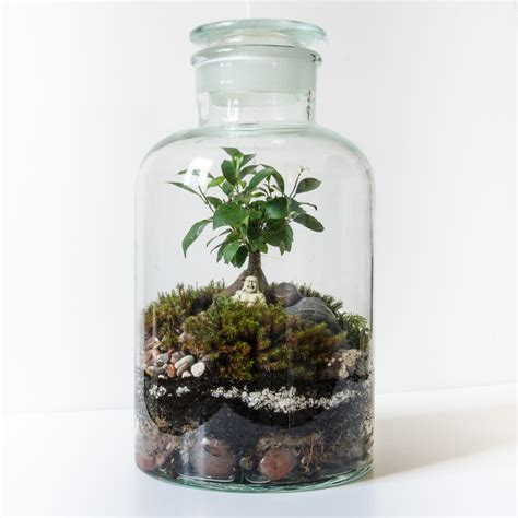 best plants for closed terrariums terrarium design inspiring enclosed terranium enclosed plant terrarium miniature plants for
