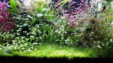 aquascape reviews aquascape review pupuk cair seachem youtube