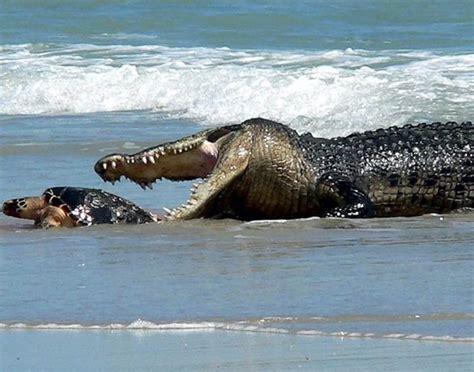 las imagenes m 225 s terrorificas del mundo youtube las 10 playas m 225 s peligrosas del mundo