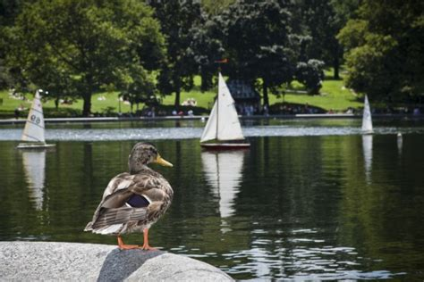 central park toy boat pond what to do in central park a walking tour walks of new york