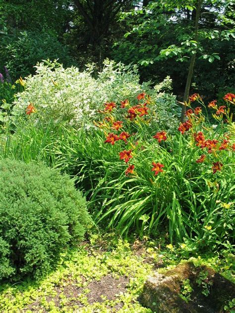landscaping photo  daylilies   landscape posted